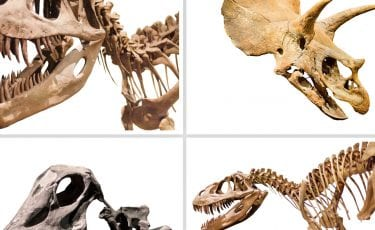 Discover dinosaurs weekend